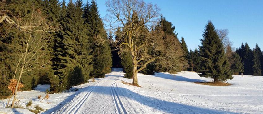 Langlaufski Ausflug mit Wild East Dresden